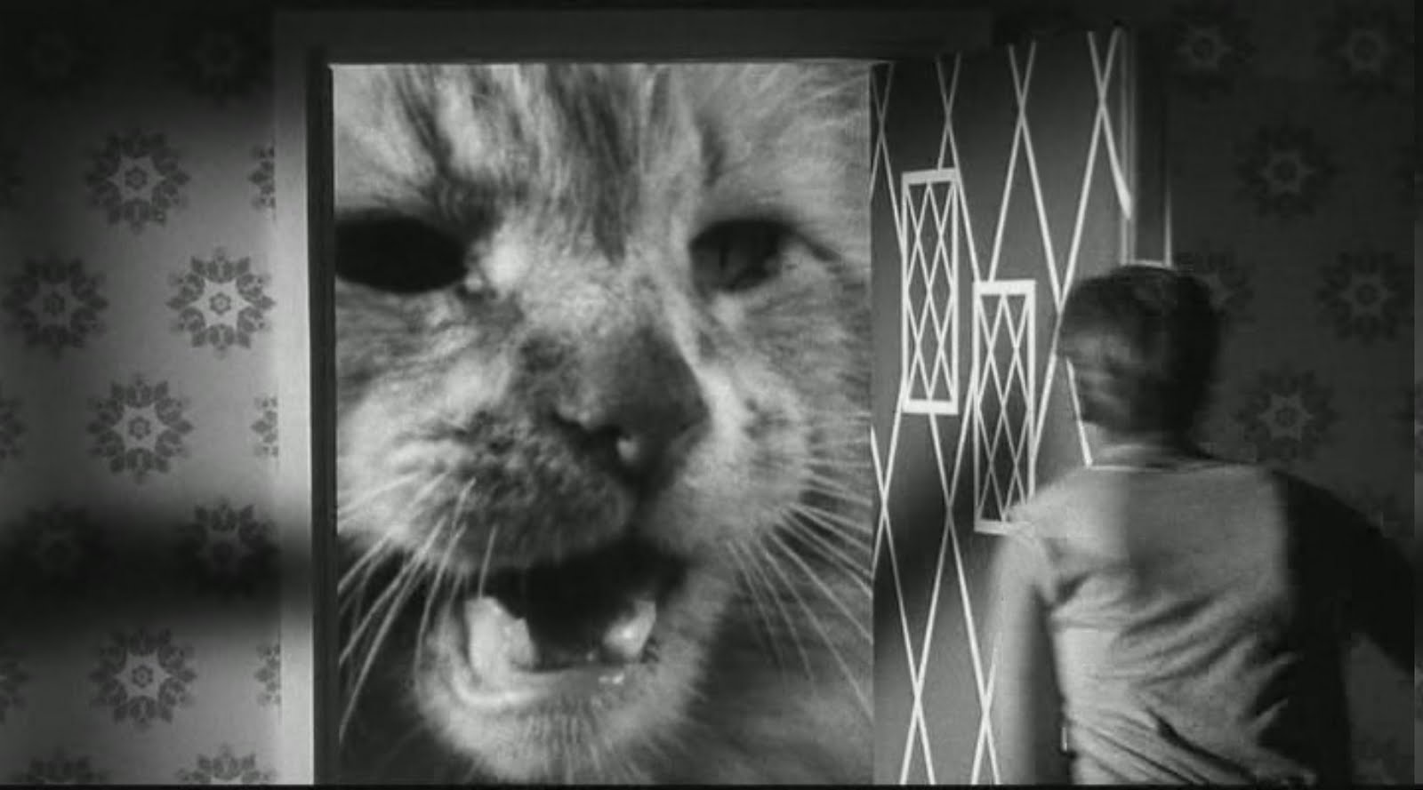 shrinking man 8